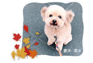「愛犬 茶々」の写真